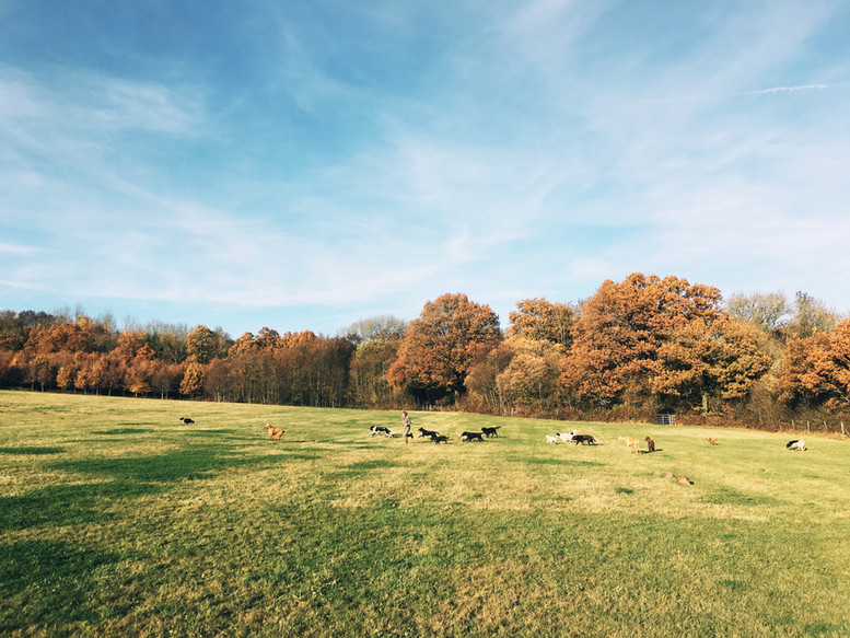 Autumn views 😍