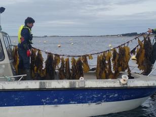 Besøk hos Seaweed Energy Solution på Frøya.