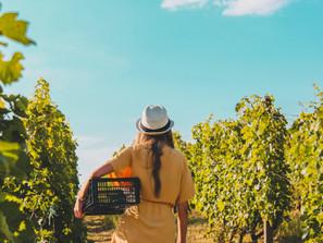 Donne e Sostenibilità in Agricoltura: l'Istat lancia il contest tutto al femminile