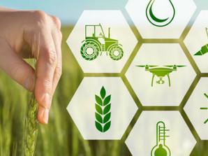 Filiera agroalimentare italiana: un nuovo report analizza le performance e la struttura produttiva