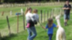 ivy walking alpaca.jpg