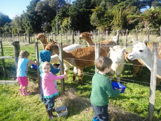 Latest on alpaca feed