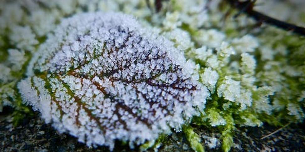 Remedies for Cold & Flu Season
