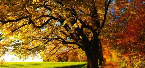 tree-avenue-back-light-sun.jpg