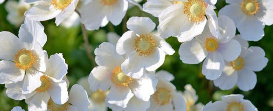 white-flower-plant-flowers-67608.jpeg