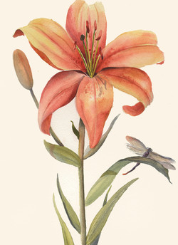 Remembering Lily