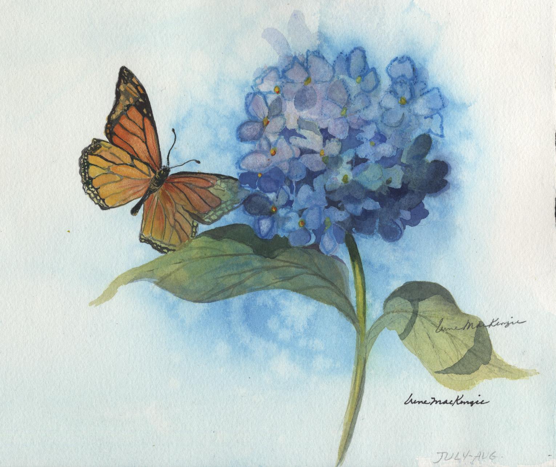 Monarch Butterfly on Hydrangea