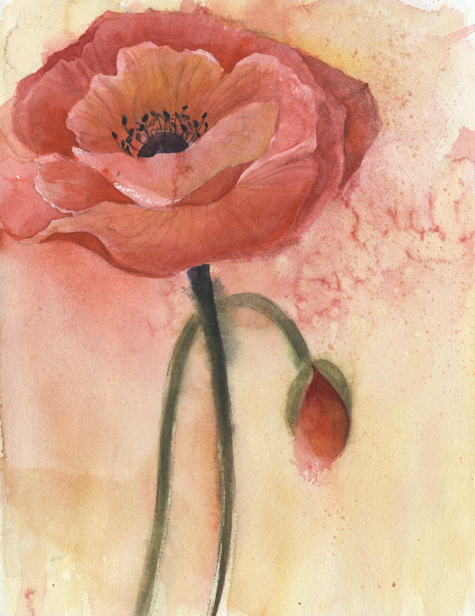 A Poppy