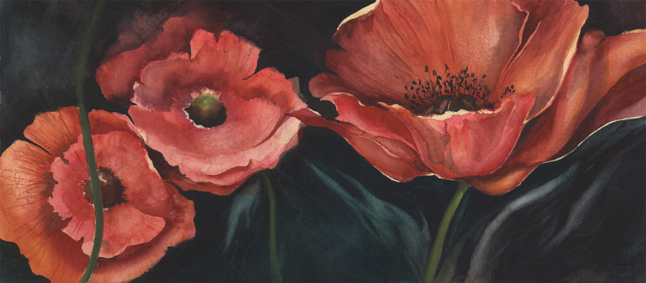 Poppy Emergence