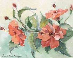 Jan's Hibiscus