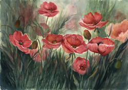 Poppies-in-Sunlight-20-x-14