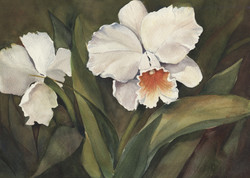 Orchids in White