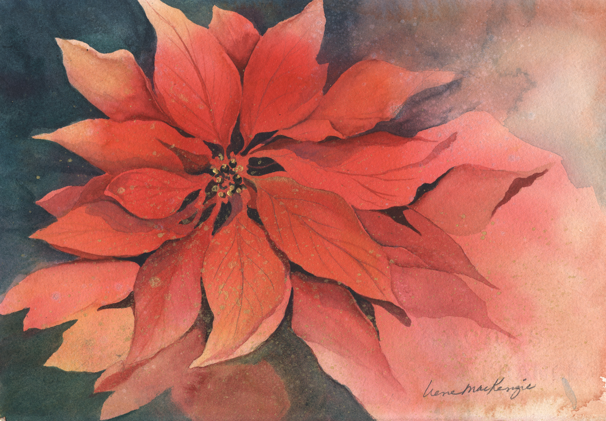 Golden Poinsettis