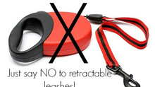 Retractable Leashes & Puppies - MUST READ
