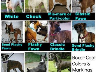 Boxer Coat Colors
