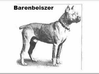 Boxer Biography - What Are The Origins Of Our Favorite Breed???