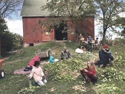 Community Farm of AA partnership