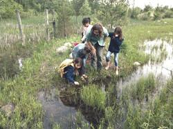 Exploring a wetland habitat