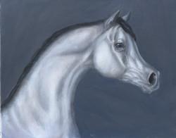 Arabian in Black and White