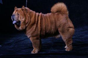 SMOOTH LION BOY IS LAZURITA MENES.jpg
