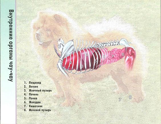 7 - внутренние органы.jpg