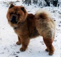 O'Shimas Ozzy Bear