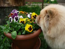 6 месяцев с цветами