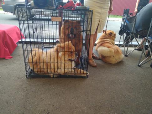 Глория и Геба в ожидании рингов