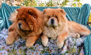 Какие они красивые!