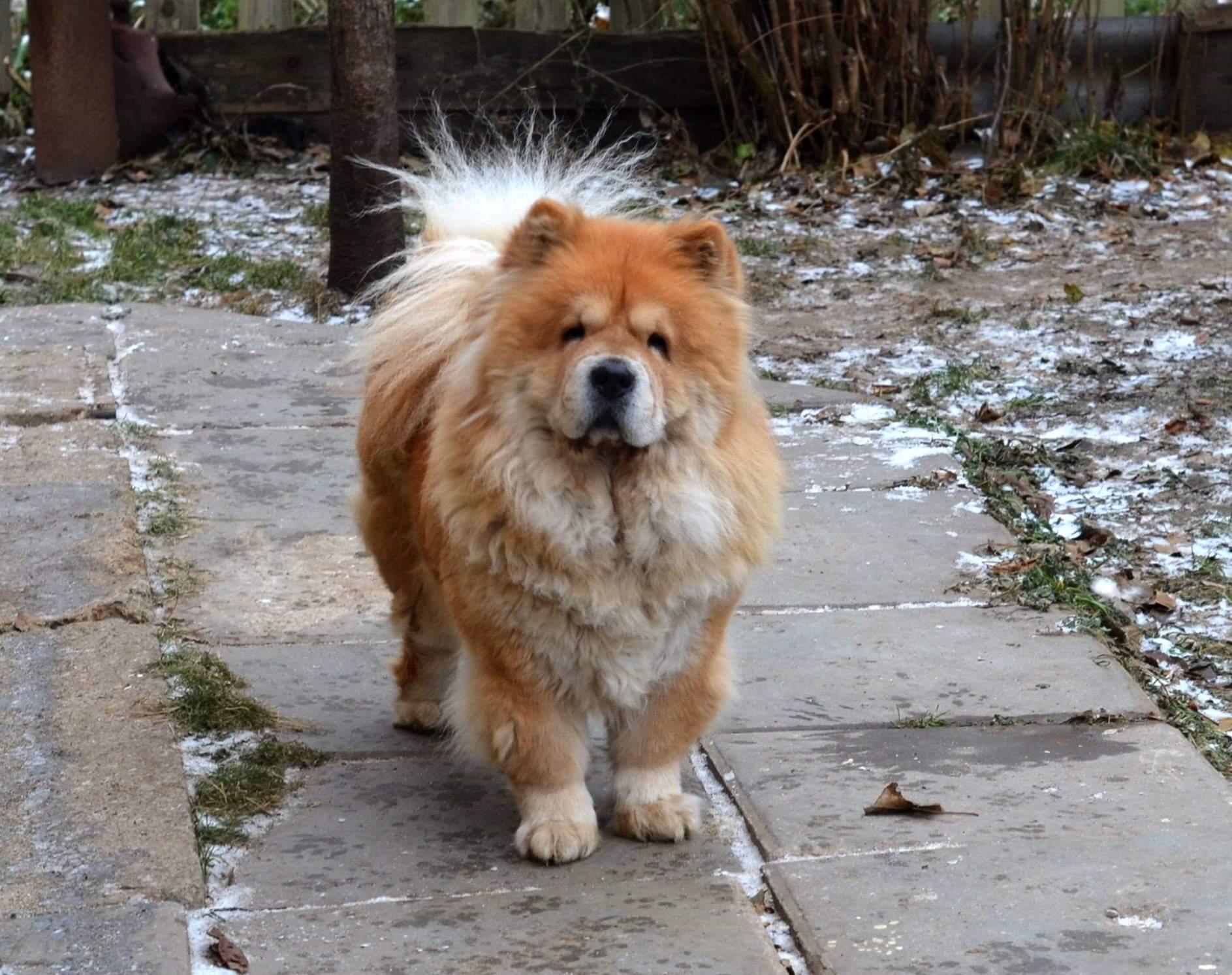 Лав Стори Олайда (7 лет)