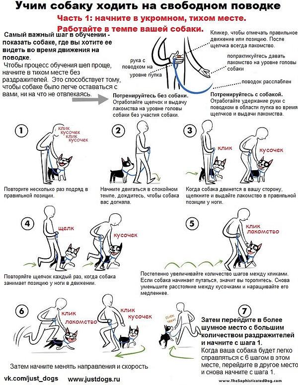 Учим собаку ходить на свободном поводке
