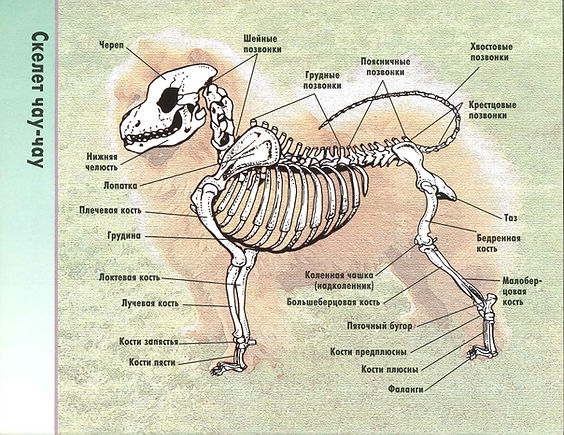 7 - скелет.jpg