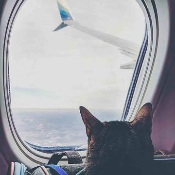 Cat Hijacked the Plane