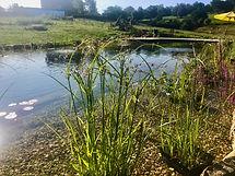 Poolside_planting.jpg