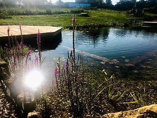 Natural_Swimming_Pool.jpg