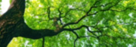 Justin's Dallas Tree Service - WE SERVICE THE FOLLOWING DALLAS COUNTY CITIES  Addison, BalchSprings, Carrollton, CedarHill, CockrellHill, Combine, Coppell, Dallas, DeSoto, Duncanville, Farmers Branch, Garland, Grand Prairie, Glenn, Heights, Highland , Park, Hutchins  Irving, Lancaster, Mesquite, Richardson, Rowlett, Sachse, Seagoville,  Sunnyvale, University Park, Wilmer