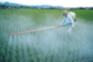 Man covered and wearing an oxygen mask spraying chemicals over a crop