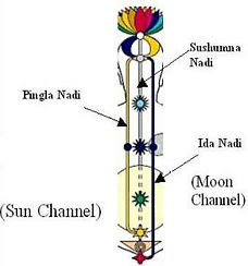 the Subtle system showing the Energy channels in the body: Pingala Nadi (channel), Sushumna Nadi, Ida Nadi as well as the Sun & Moon Channel