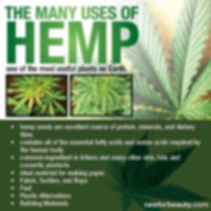Image showing the many uses of Hemp, one of the most useful plants on Earth: hemp seeds are excellent source of protein, minerals and dietary fibre. Contains all of the essential fatty acids and amino acids required by the human body. Common ingredient in lotions and many other skin, hair and cosmetic products. Ideal material for making paper. Fabric, Textiles and rope. fuel. Plastic alternatives. Building materials