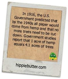A Note by 'hippiebutter.com states: 'In 1916, the U.S. Government predicted thatby the 1940s all paper would come from hemp and that no more trees need to be cut down.  Government studies report that 1 acre of hemp equals 4.1 acres of trees.'