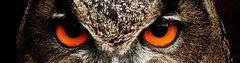 Algebra of Owls