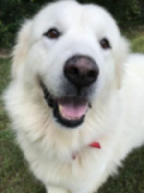 adoptable Maggie4.jpg