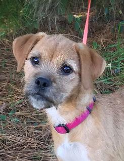 adoptable Sasha3 (2).jpg