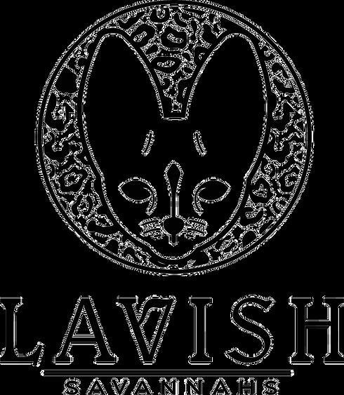 Lavish Savannahs, savannah cats, savannah kittens, meow, kittens, cats, breeders, savannah breeders, exotic kittens