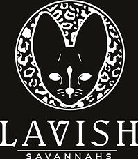 LAVISH%20SAVANNAH%20WHITE_edited.jpg
