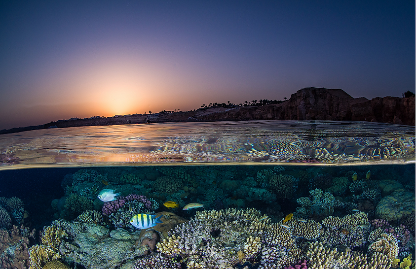 coral reefs at sunset in the Red Sea