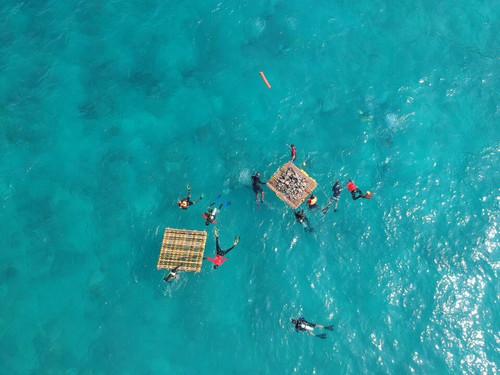 Coral Reef Rehabilitation