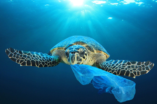Plastic Waste Reduction
