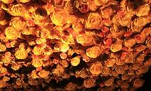 Matakana Cinemas Flowers.png