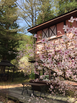 桜IMG_1755